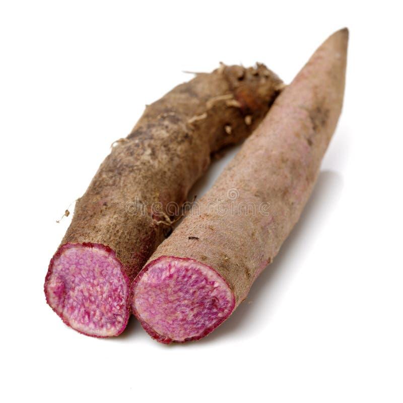 Fresh Dioscorea alata root. Isolated on white background royalty free stock photo