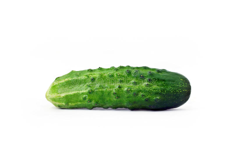 Download Fresh domestic cucumber stock photo. Image of isolated - 10644728