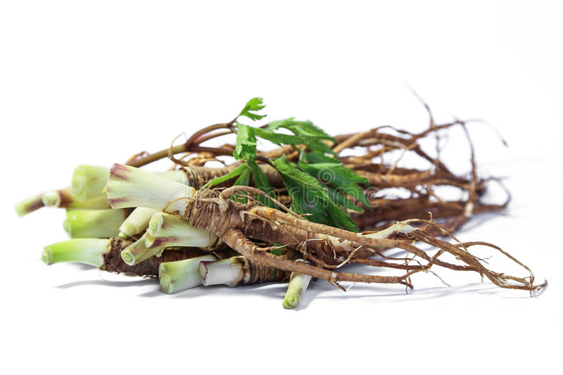 Fresh Quai or female ginseng root, Chinese herbal medicine. Fresh Quai and Quai leaf on white background. Root of Quai used in Chinese traditional medicine for stock images