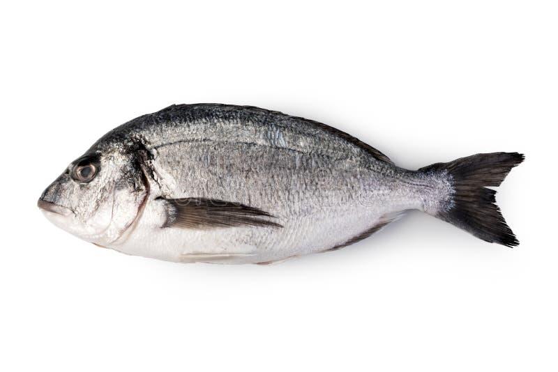 Fresh dorado fish. Isolated on white background stock image