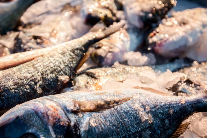 Fresh Dorado fish on Ice at outdoor fish flea market royalty free stock image