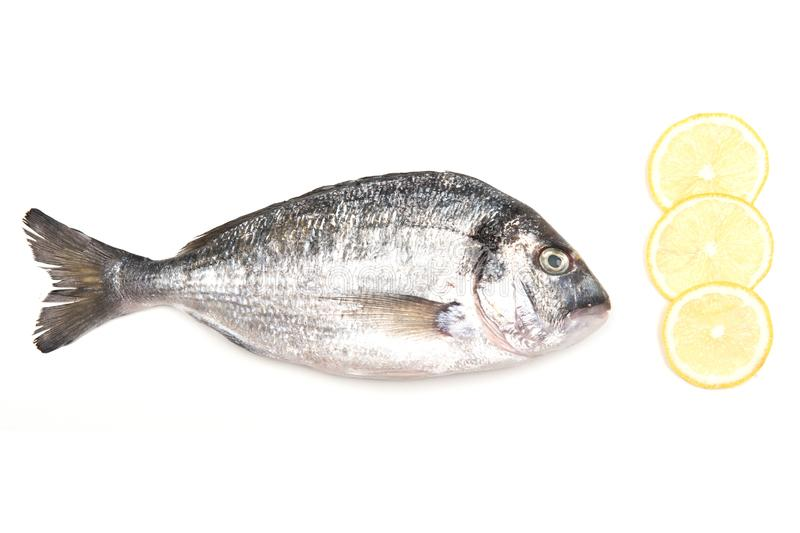 Fresh Dorado Fish on white background with ingredients for cooking. Fresh Dorado Fish isolated on white background ingredients for cooking. View from above stock photos