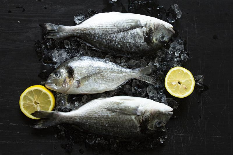 Fresh dorado or sea bream fish with lemon and ice wooden board over black background. Top view stock photos