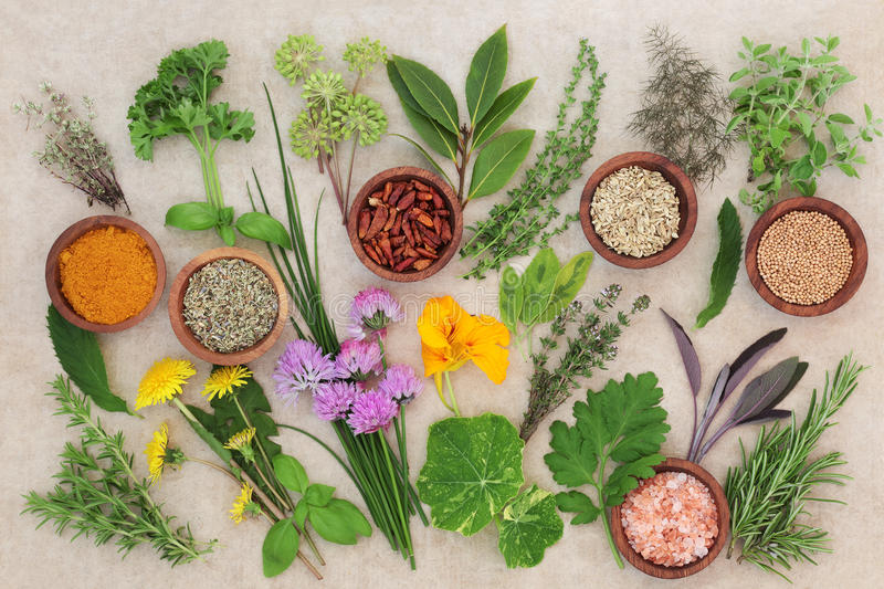 Fresh and Dried Herb Selection. On hemp paper background stock photos