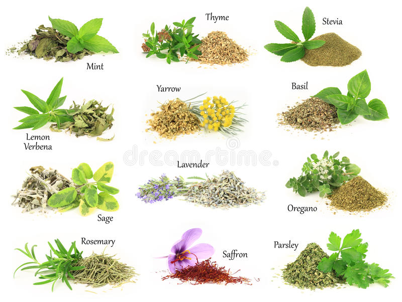 Fresh and dry aromatic herbs stock photo