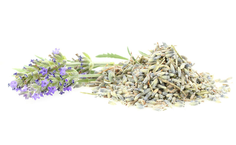 Fresh and dry lavender stock images