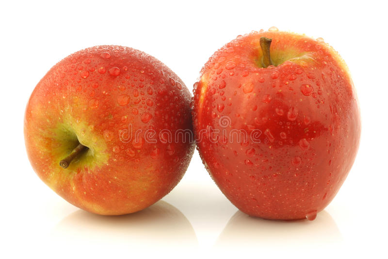 Fresh Dutch Jazz apples royalty free stock photo