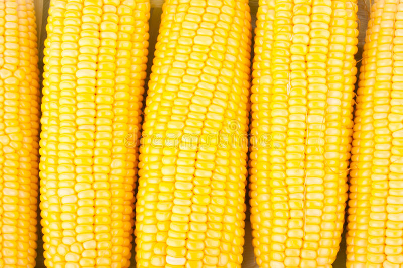 Fresh ear of sweet corn on cobs kernels or grains of ripe corn on white background vegetable isolated stock photo