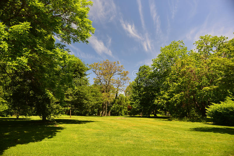 Fresh early summer trees and grass and a blue sky royalty free stock images