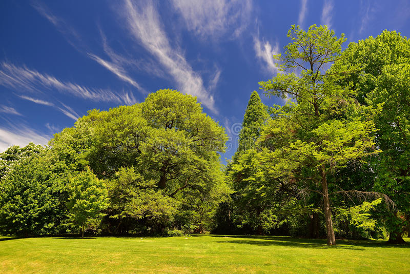 Fresh early summer trees and grass and a blue sky stock photos