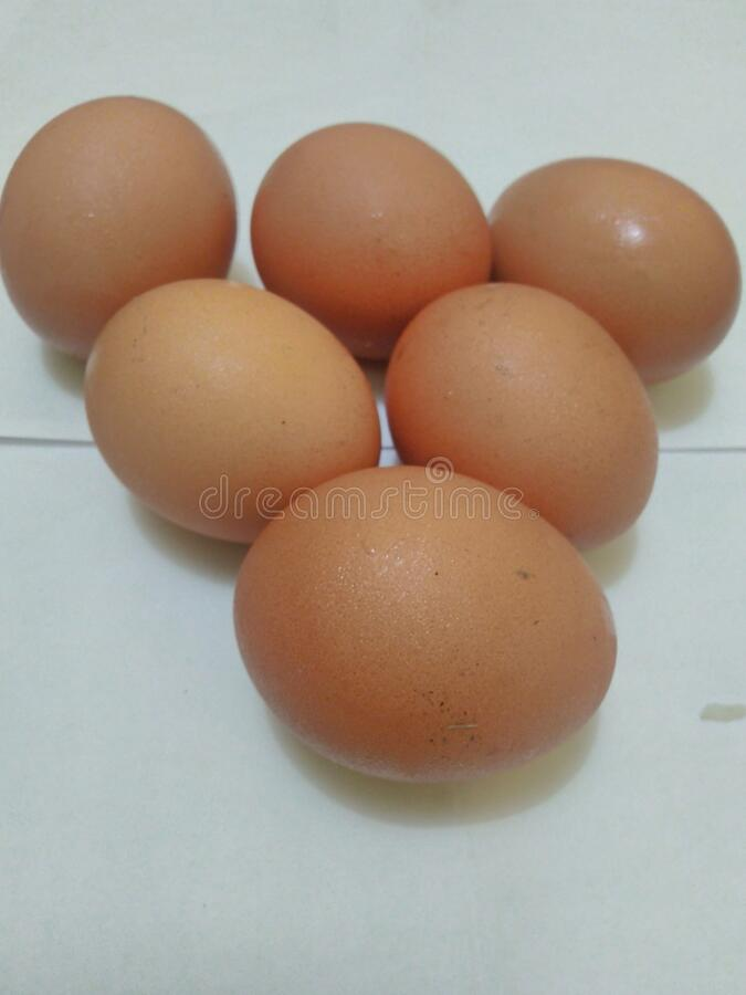 Fresh egg on a plate royalty free stock image