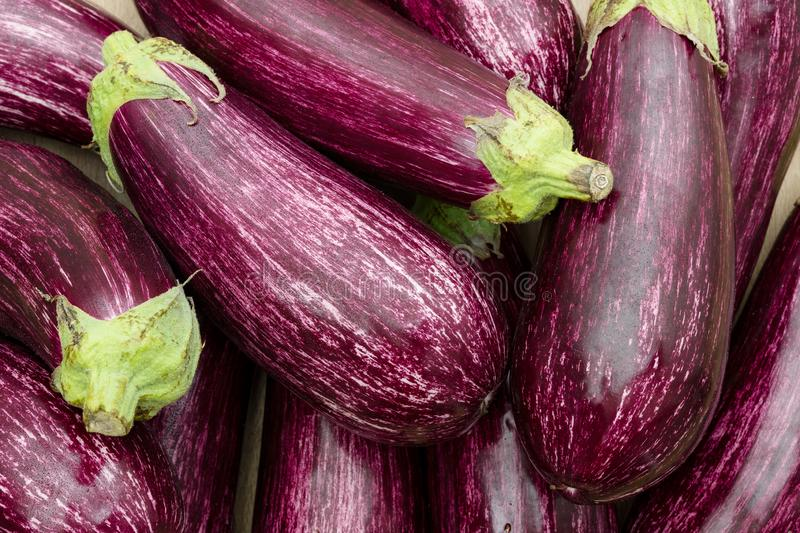 Fresh Eggplant from the daily market. Recolt of fresh Eggplant as a background royalty free stock photo