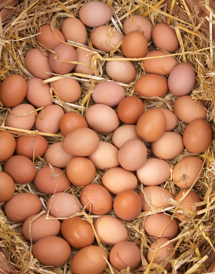 Free Fresh Eggs Royalty Free Stock Photo - 16170745