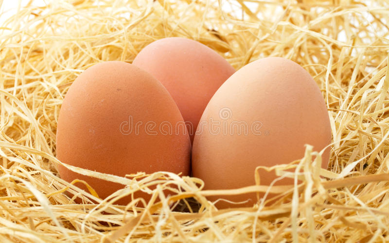 Download Fresh eggs close up stock photo. Image of natural, fragility - 19030126