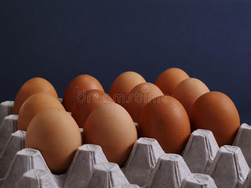Fresh Eggs. In Egg Carton On Black stock image