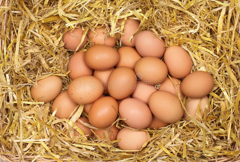 Fresh Eggs in Straw stock photos