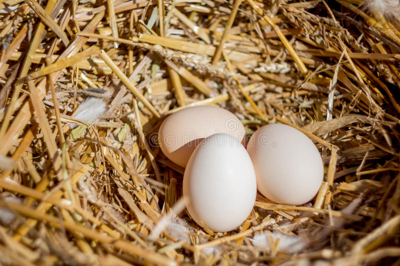 Fresh eggs in a straw nest royalty free stock photo