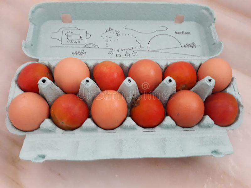 FRESH EGGS WITHING TOMATOES stock images