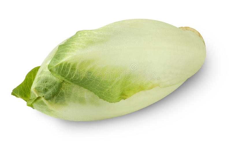 Isolated endive royalty free stock image