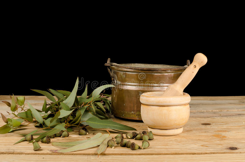 Fresh eucalyptus. Seeds and leaves in a still life royalty free stock image