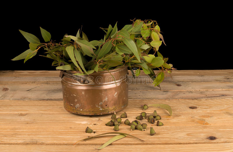 Fresh eucalyptus on table royalty free stock image