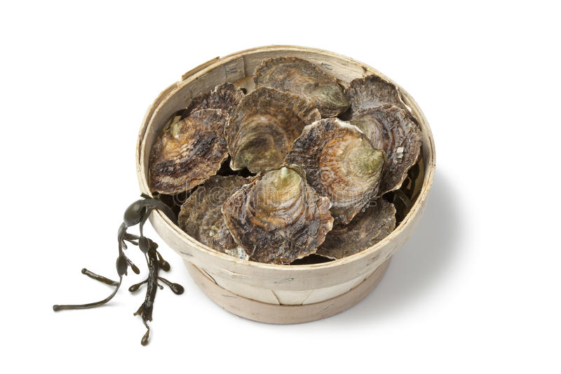 Fresh European Flat Oysters In A Basket Royalty Free Stock Image