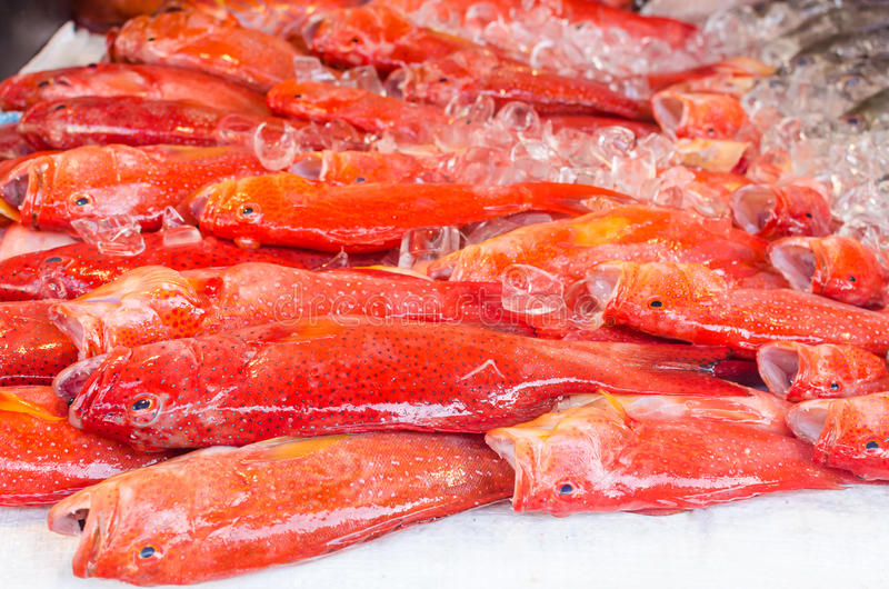 Fresh exotic fish on ice in seafood market on Boracay island stock images