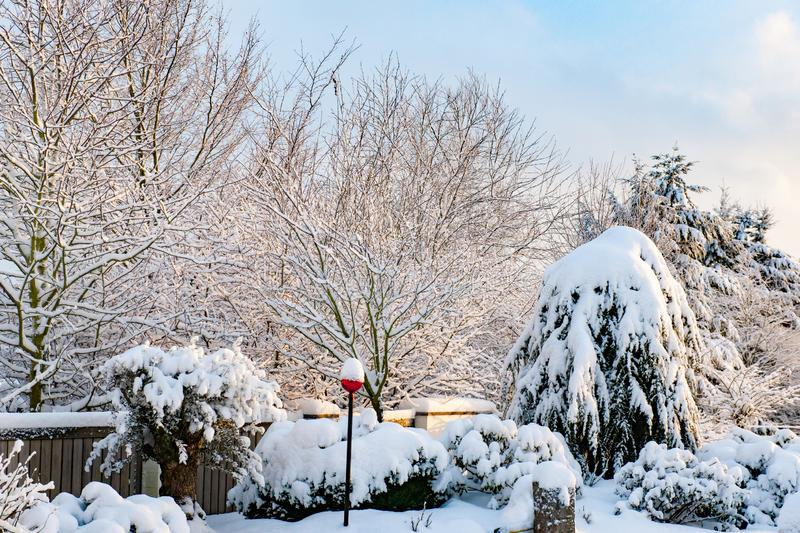 Fresh fallen snow on trees and plants in winter garden stock photography