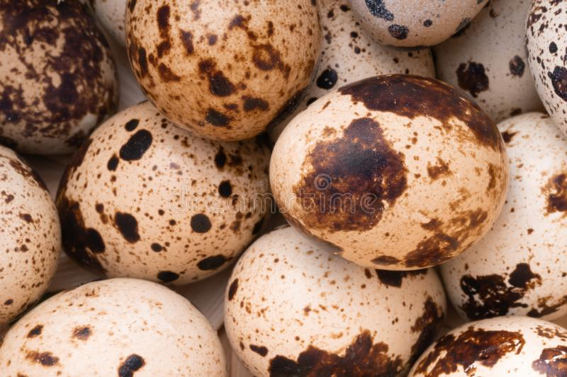Fresh, farm, raw quail eggs on white background. Protein diet. Healthy diet royalty free stock images