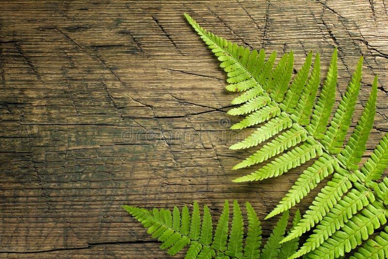 Fresh fern border stock photo