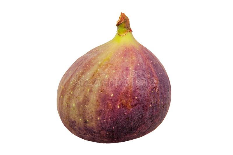Fresh fig on a white background royalty free stock photo