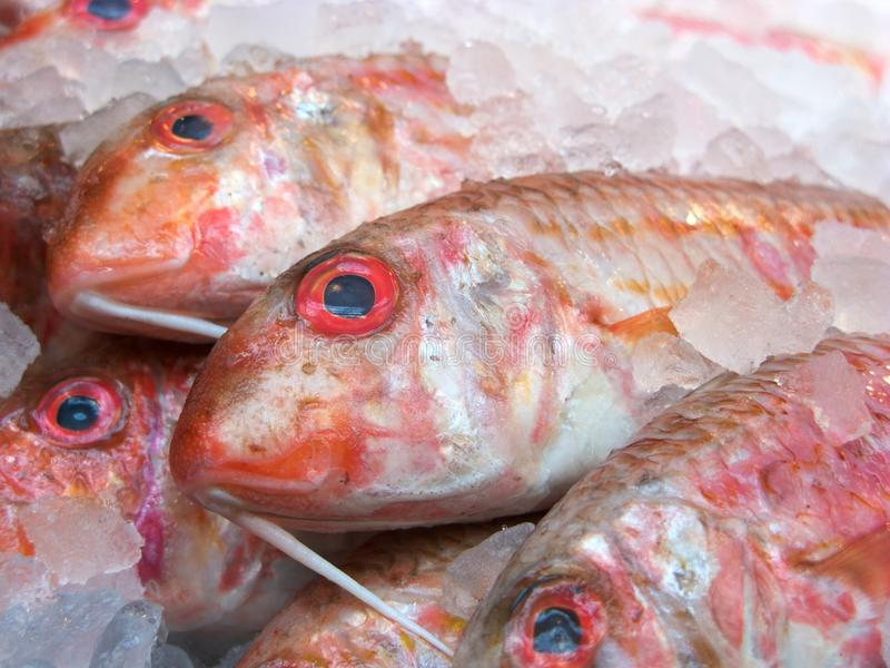 Download Fresh fish stock photo. Image of healthy, eyes, market - 11888820