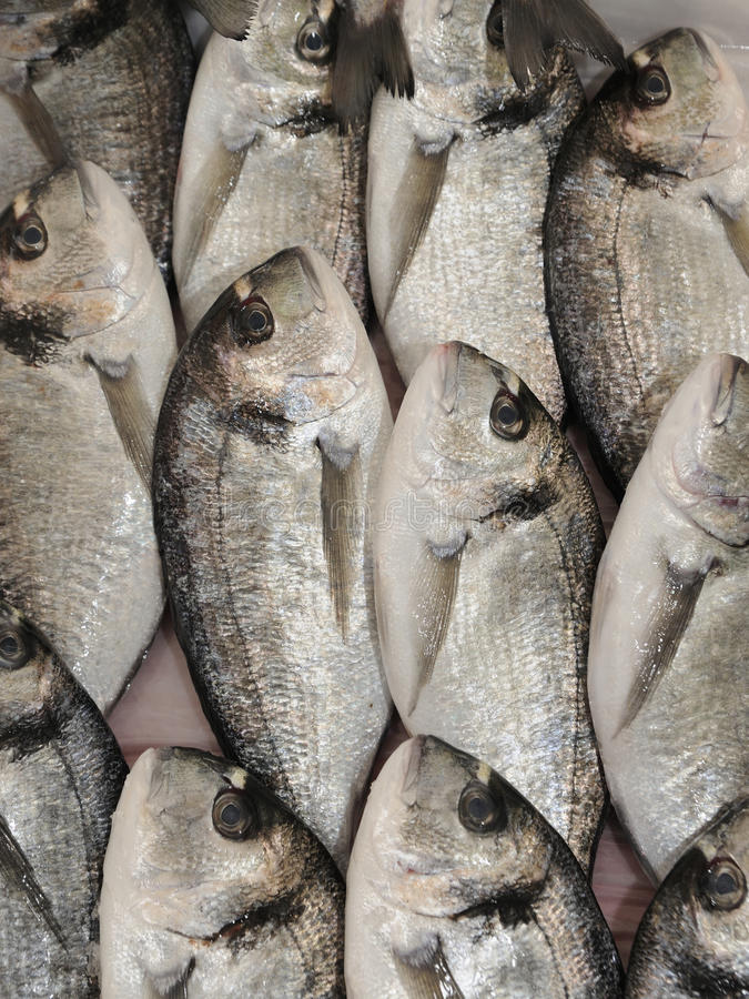 FRESH FISH royalty free stock photo