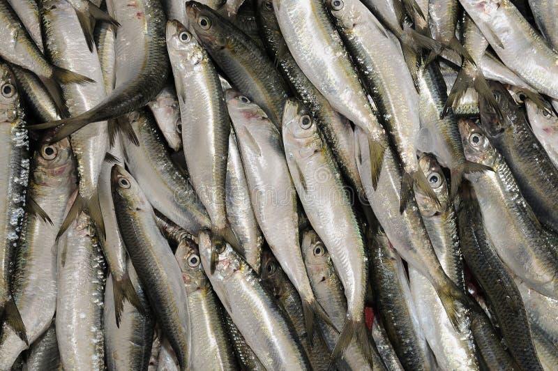 FRESH FISH stock photography