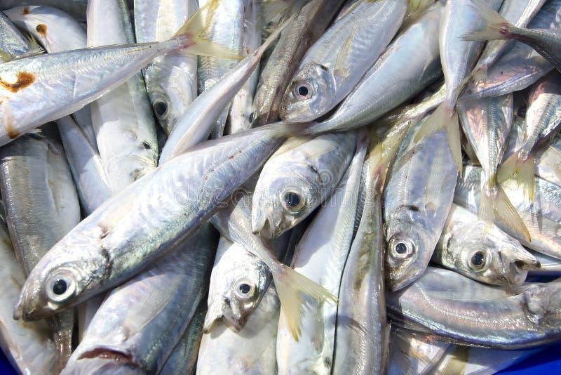 Fresh fish. Close up image of fresh fish at the market royalty free stock image