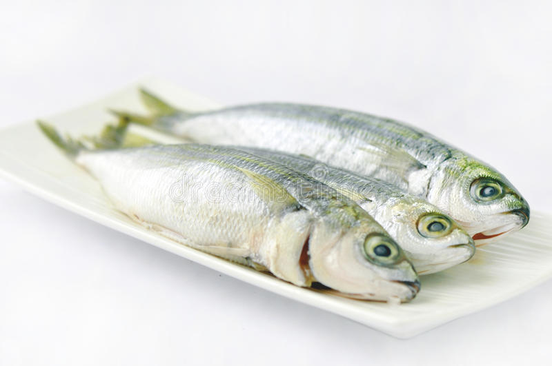 Fresh fish. On a wihte dish royalty free stock images