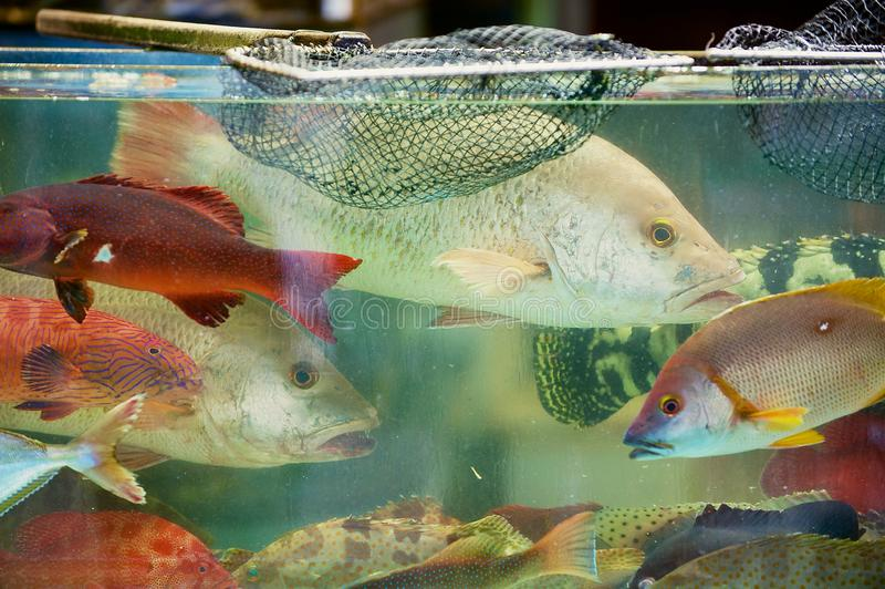 Fresh fish catch of the day behind the wet stall glass at the seafood market in Hong Kong, China stock photography