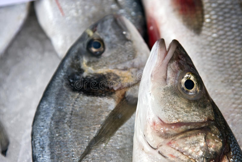 Fresh Fish Closeup Royalty Free Stock Images