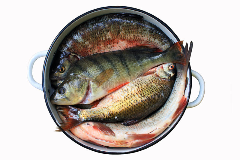 Fresh Fish For Cooking Stock Photo