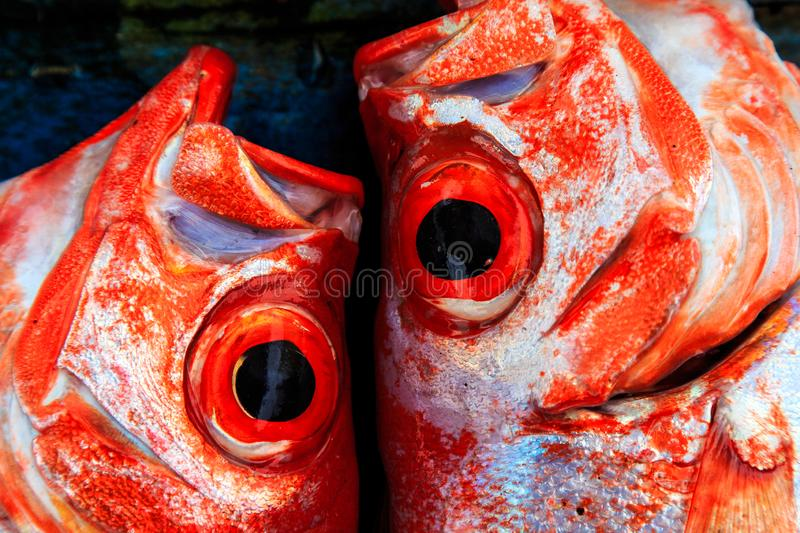 Fresh fish displayed on a market stall. In detail stock photography