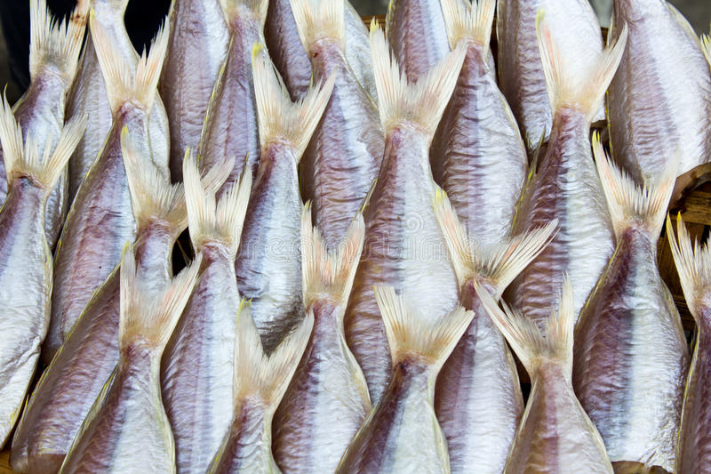 Download Fresh fish drying stock image. Image of fishes, death - 26575603