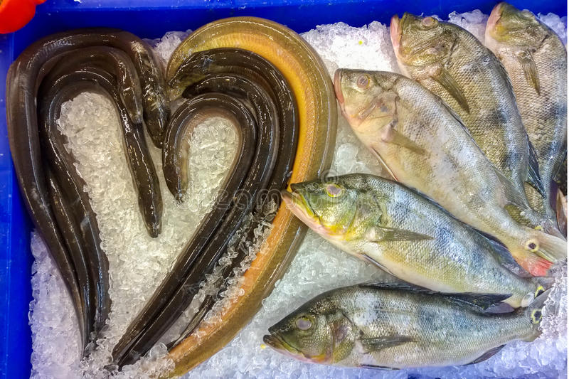 Fresh fish and eels on ice royalty free stock images