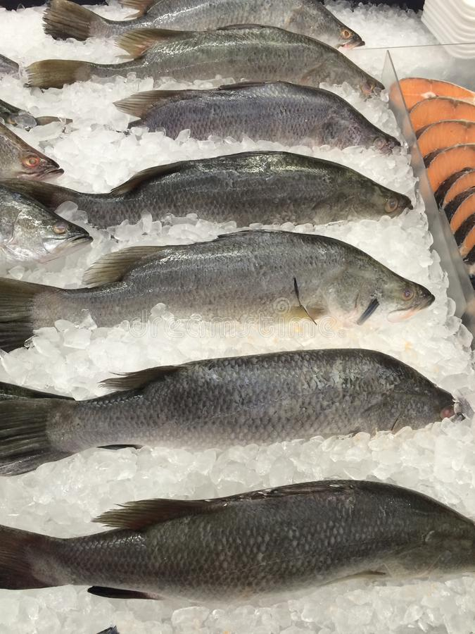 Fresh fish frozen on ice. Fresh fish seafood frozen on ice royalty free stock images