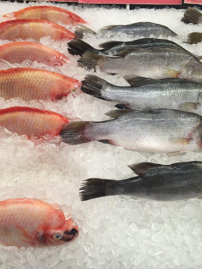 Fresh fish frozen on ice. Fresh fish seafood frozen on ice stock photos