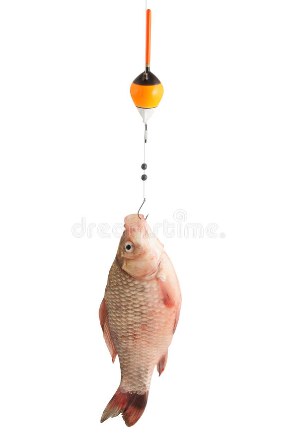 Fresh fish on hook royalty free stock images