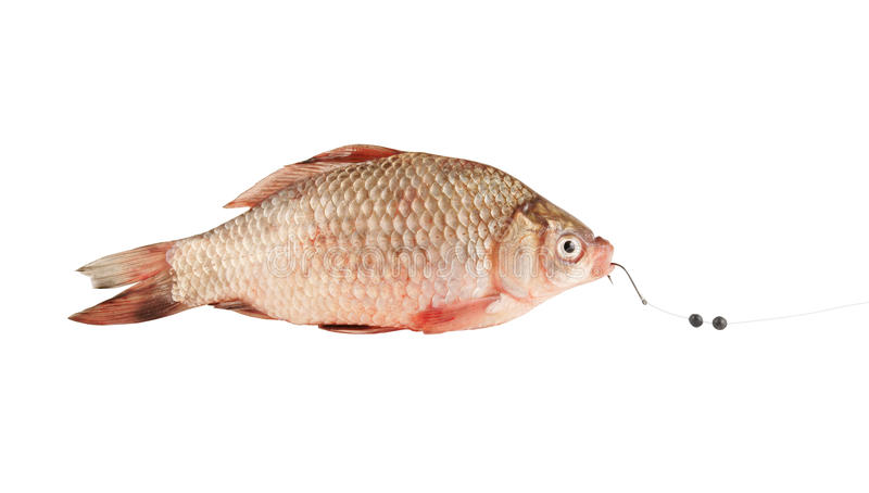 Fresh fish on hook royalty free stock photos