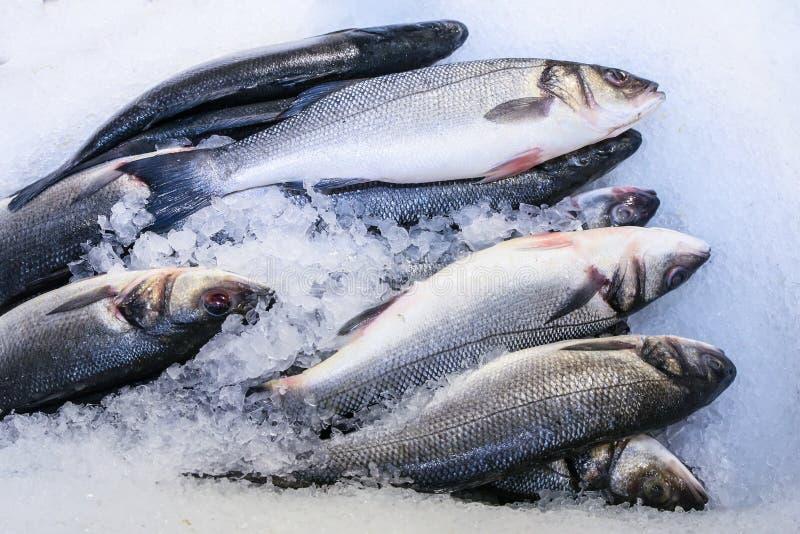 Fresh fish. On ice royalty free stock photo