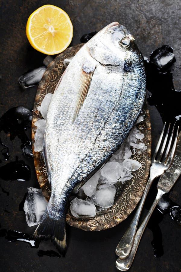 Fresh fish. On ice (dark vintage background royalty free stock image