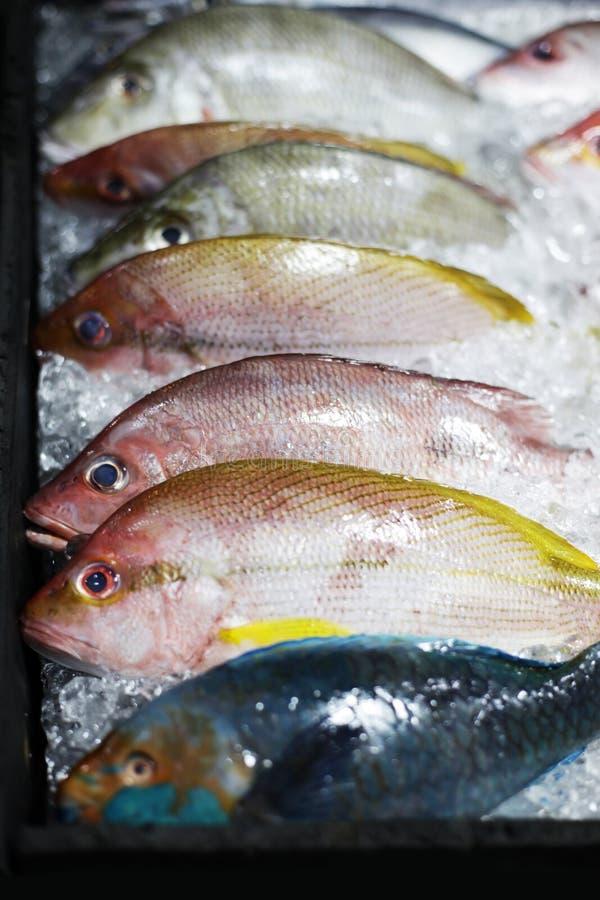 Fresh fish in ice stock photos