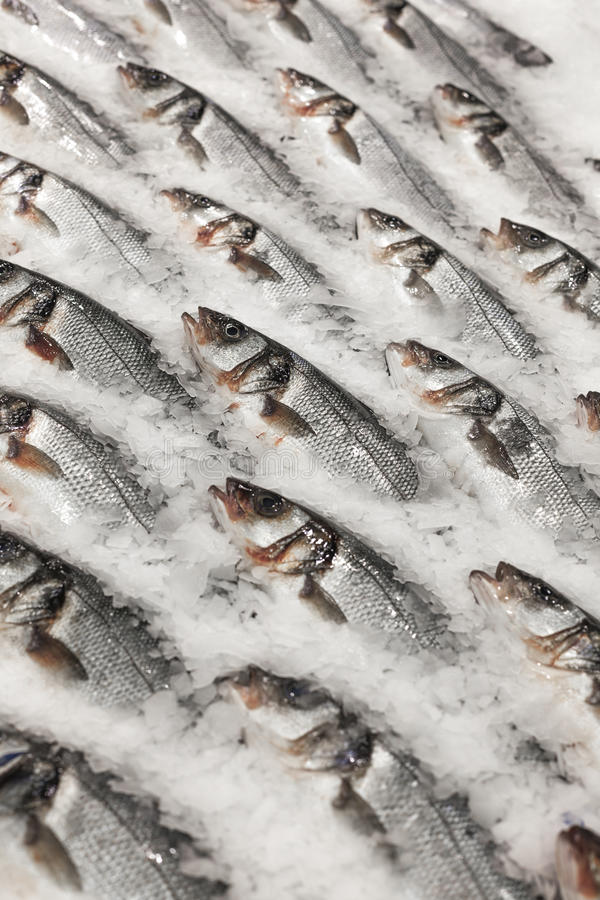 Fresh fish on ice. On the market royalty free stock photos